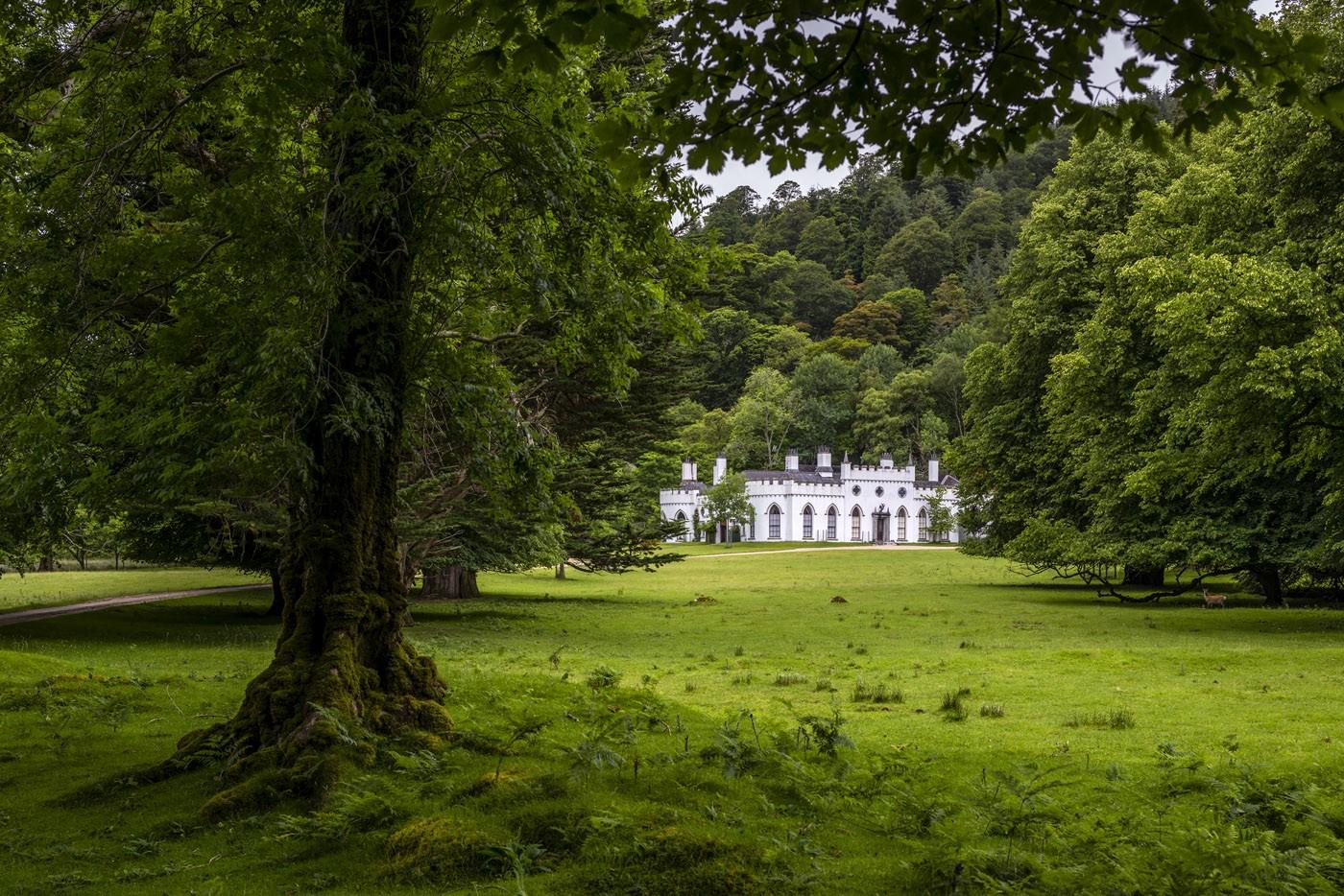 €28 Million 'Irish Honeypot'